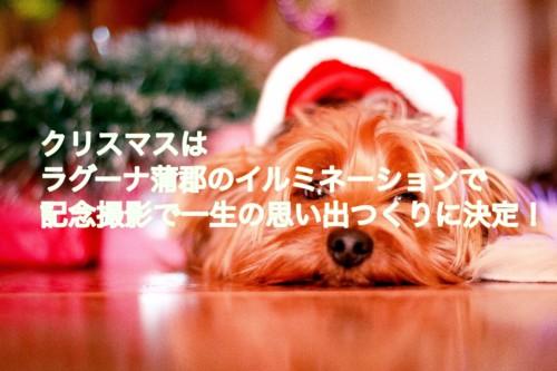 クリスマスの犬